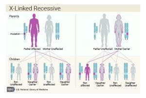 XLA diturunkan melalui kromosom X