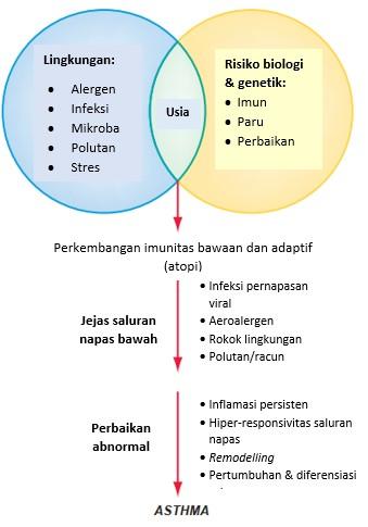 Patogenesis Asma